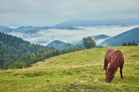 Brown horse grazing on the lawn on a background of mountains 免版税图像 - 105108693