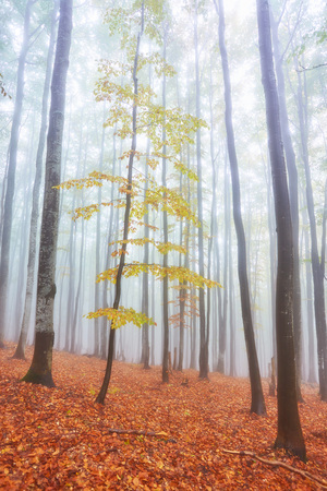 Autumn landscape in foggy wood with a track Stock Photo