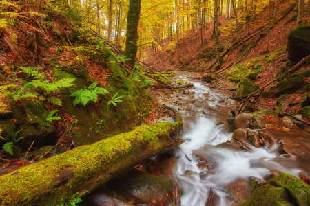 rapid mountain river in autumn. Colorfull wood background