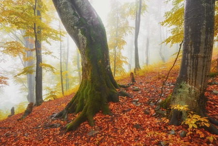 Autumn landscape in foggy wood with a track Stockfoto