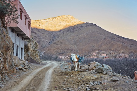 Town of Imlil, lonely donkey on the road, Toubkal national park, Morocco