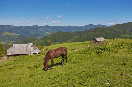 Beautiful horse on a summer mountain pasture 版權商用圖片