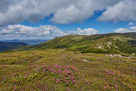 Mountain path through blooming rhododendron valley on sunset