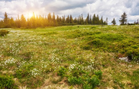 Beautiful view of the tranquil alpine landscape with green meadows, trees, dark low clouds on the mountains in the background on a sunny summer day. Idyllic mountain scenery background with copy space 写真素材