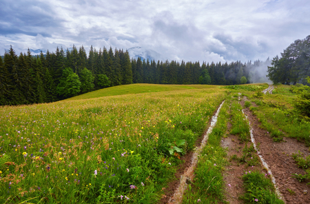 Forest road through a pine forest and flowering meadows