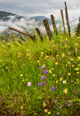 Panoramic view of beautiful landscape in the Alps with fresh green meadows and blooming flowers and snow-capped mountain tops in the background on a sunny day with blue sky and clouds in springtime.