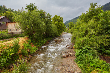 Beautiful mountain river. Tourism in the Carpathian Mountains. Western Ukraine. Tall pines and Norway spruces.