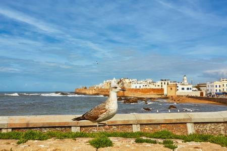 Sea-gull guard the fortress of Essaouira, Morocco. Essaouira is a city in the western Moroccan region on the Atlantic coast. 版權商用圖片