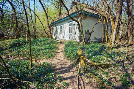 ruined old houses in Zalyssia village located in Chernobyl Exclusion zone, popular dark tourism location, Ukraine, Eastern Europe Stock Photo