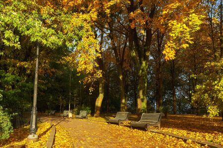 Park with bench on alley in yellow autumn