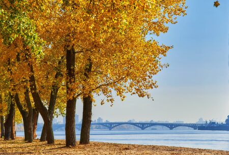 Autumn trees near the river, leaves on sand. Landscape in sunny day