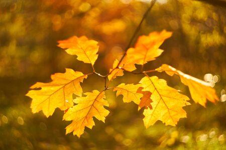 Autumn leaves on the sun. Fall blurred background. 版權商用圖片 - 131363095
