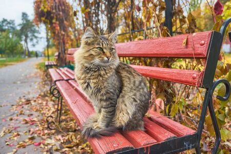lonely tabby cat is sitting on the bench outside Stock Photo