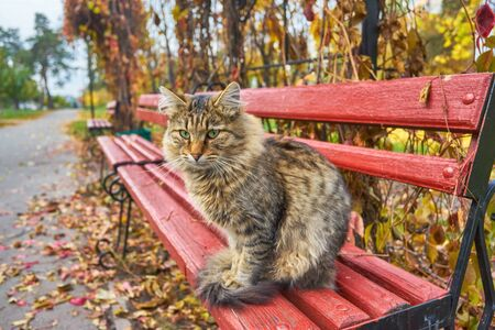 lonely tabby cat is sitting on the bench outside Foto de archivo - 131363992