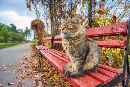 lonely tabby cat is sitting on the bench outside Foto de archivo - 131363718