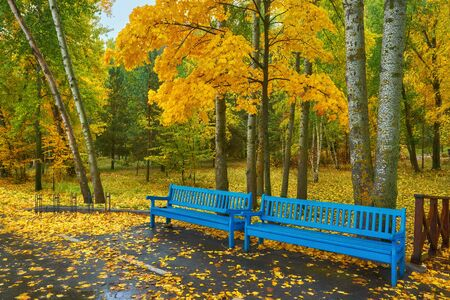 old wooden bench in city park. natural vintage autumn background Stock Photo