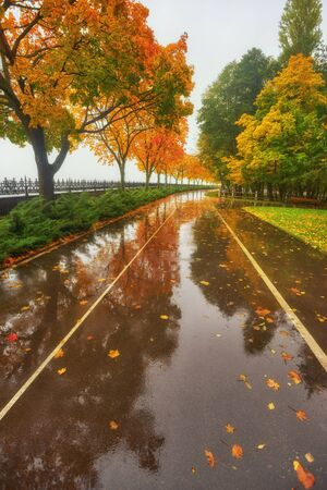 autumn park, rainy background, autumn landscape background rain texture in an October park, walk in bad weather, drops of water, windy weather, bad weather, sad mood Stockfoto