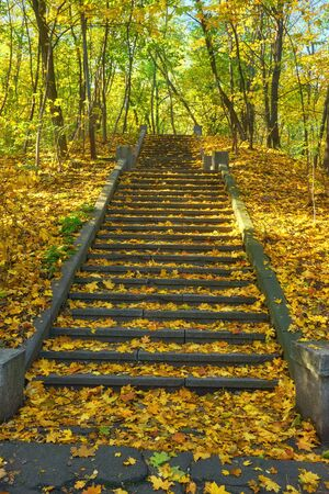 A winding staircase filled with fallen orange leaves, surrounded by yellow trees. Winding concrete staircase in autumn.