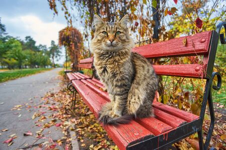 Farm cat enjoying the late afternoon sun sitting on a wood bench