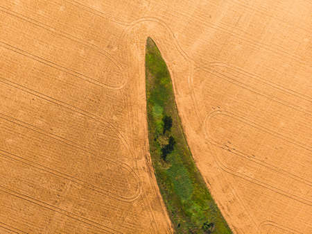 Aerial shot. Amazing island of green trees, in a yellow field of wheat, in agricultural land