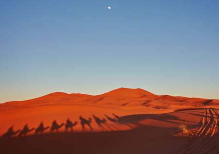 Shadows of camels in Sahara desert Merzouga, Morocco 版權商用圖片