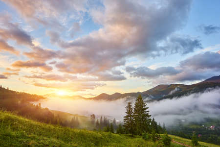 Beautiful sunset and pine forest in Carpathian mountains 版權商用圖片