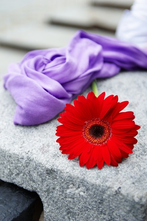 positiv: Red gerbera flower and purple scarf on the stone