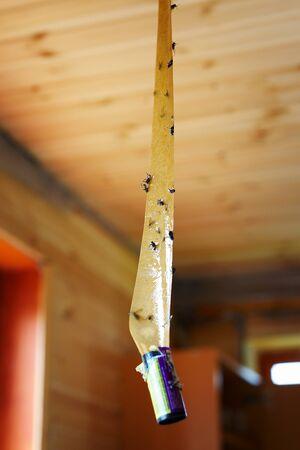 humanismo: Cinta adhesiva para atrapar las moscas Foto de archivo
