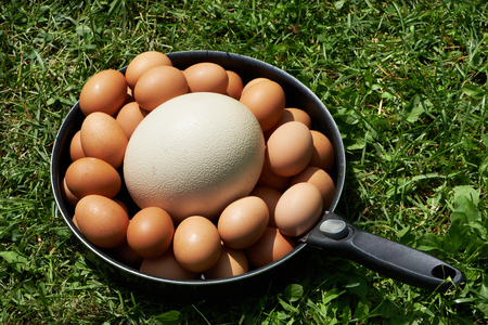 Chiken eggs and ostrich egg on pan in grass photo