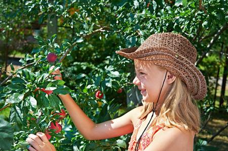 harvests: Girl in a cowboy hat harvests plums