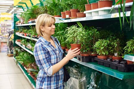 Woman chooses a house plants in the store photo