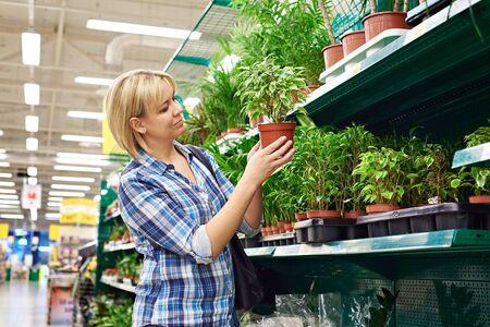 toma de decision: La mujer elige a plantas de interior en la tienda