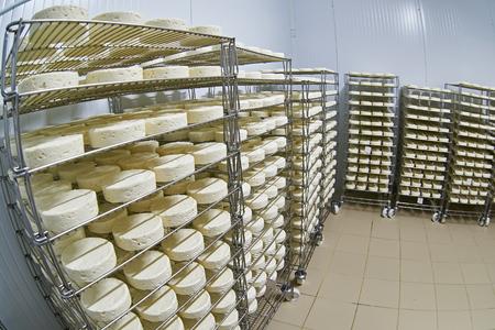 Сыродельный завод склад с полками сложены с сыром