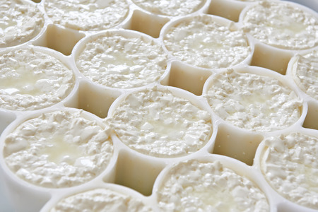 semifinished: Molds with semifinished for the production of soft cheese Stock Photo