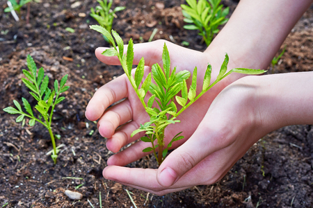 carefully: Childrens hands carefully holding a plant Stock Photo