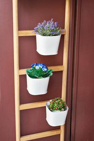 cultivated: Flowers in pots in wooden staircase on a brown wall
