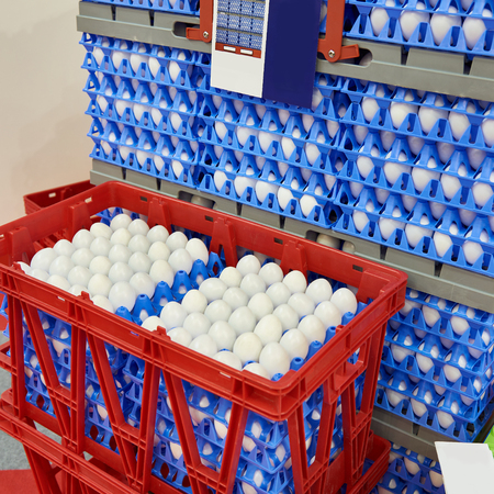 Chicken eggs in plastic boxes at the food factory