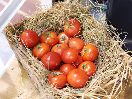 Tomatoes in a basket with straw