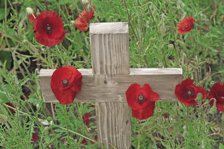 Remembrance day a poppy and a wooden cross - A wooden cross standing upright with  poppies growing around its base and green foliage in the background
