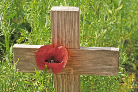 Remembrance day a poppy and a wooden cross - A wooden cross standing upright with  a poppy growing around its base and green foliage in the background