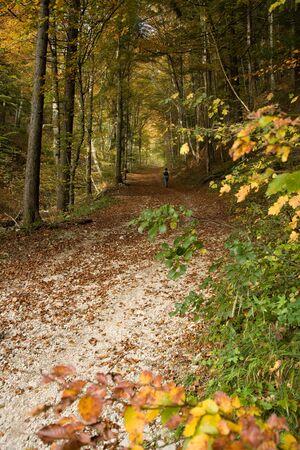 idylle: A walk through the autumn forest of Weissenstein. Stock Photo