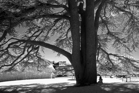Woman sitting under the tree in black and white in infrared photo