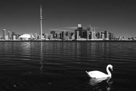building cn tower: Toronto from the island with white swan in black and white