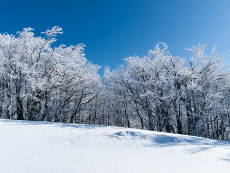 trees photography: Winter scenery in the mountains Beskid Sadecki  Photography chilled with beech trees covered with snow and the sun piercing through the trees