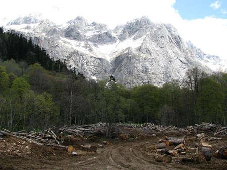 alpine zone: Accident - deforestation