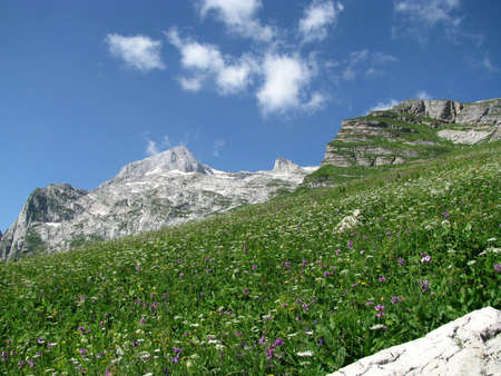 alpine zone: nature in flowers