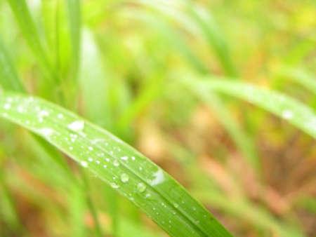 nature, splashes, dew, drop, background photo