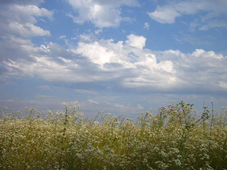 gentile: Flowerses, meadow, glade, blossom, verdure; texture; background; nature; beauty; juicy green herb; blue sky, cloud, gentile colour; light; bright, tenderness