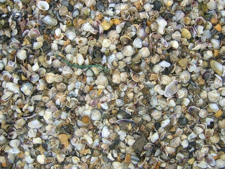 sinks: Seashells, background, texture, relief, seashore, beautiful sinks,  pattern, colour
