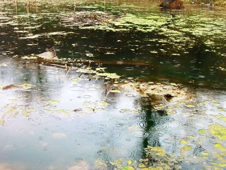 dripped: Lake, ripple on the water, pond, rain, dripped, reflection, duckweed, background, texture, type, nature, landscape, dejection, autumn, tin plate foliage, sheet, beauty, reflection